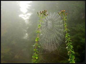 гнездо паука